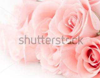 Фотообои Роза 240522484