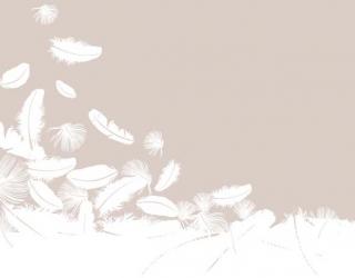 Фотообои Воздушные перья 22431