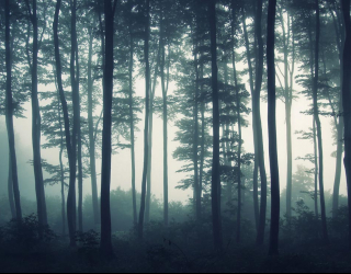 Фотообои туманный лес 20350