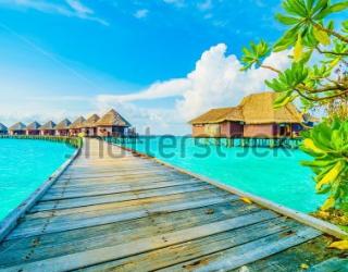 Фотообои Море, небо, пальмы 442428604