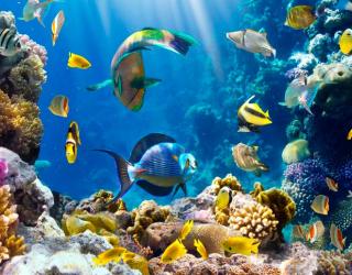 Фотообои Рыбки на морском дне 3046