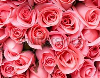 Фотообои Роза 240353668