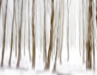 Фотообои Зимний лес картина 21230