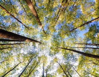 Фотообои верхушки деревьев 20390