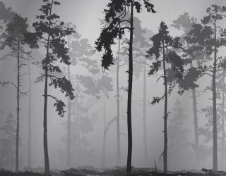 Фотообои ЧБ деревья 26002