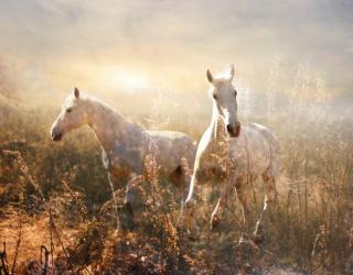 Фотообои Лошадки 18649