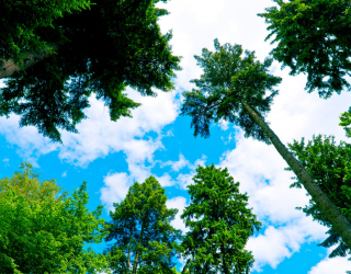 Фотообои Вид на деревья 15273