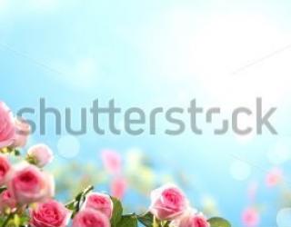 Фотообои Розы, небо  389794111
