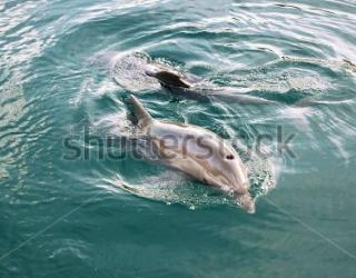 Фотообои Дельфины 451373674