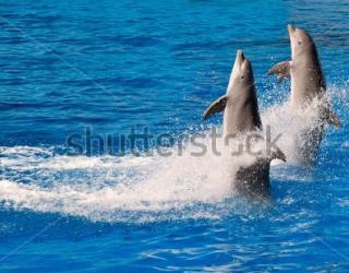 Фотообои Дельфины 455003785