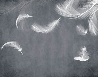 Фотообои Белые перья на сером 28025