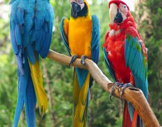 Фотообои три попугая 21574