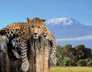 Фотообои Леопард 19483
