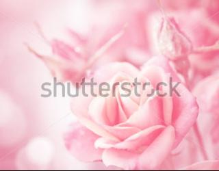 Фотообои Розы 181742723