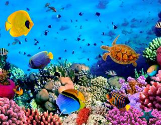 Фотообои Мир подводный. Красоты. 3233