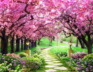 Фотообои Розовые деревья 22343