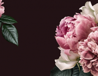 Фотообои Розовые пионы 26241