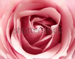 Фотообои Роза 136109810