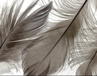 Фотообои Коричневые перья 22856