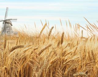 Фотообои Поле пшеницы 24218