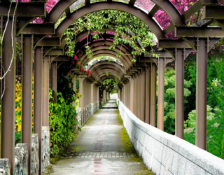 Фотообои Цветочная арка 22261
