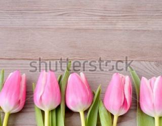 Фотообои Тюльпаны 381102046