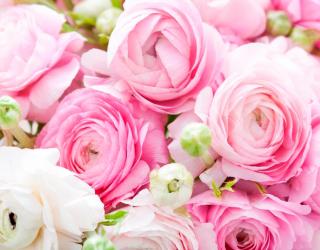 Фотообои Букет розовых пионов 12014