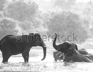 Фотообои Слоны 455926306