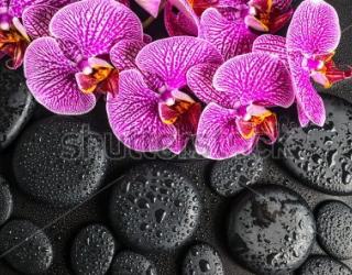 Фотообои Орхидеи, камни 195317123