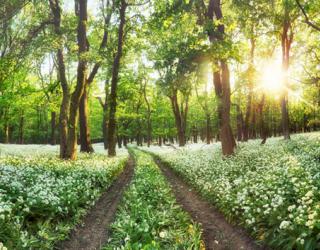 Фотообои Дорога в лесу 22804