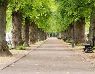 Фотообои Арка из листьев 26895