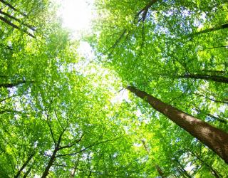Фотообои верхушки деревьев 20322