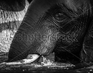 Фотообои Слоны 455928133