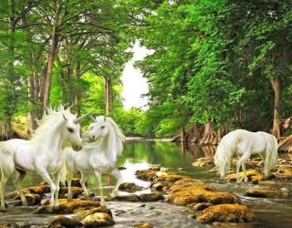 Фотообои Белые единороги в лесу 22272