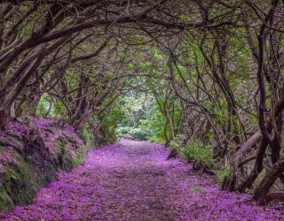 Фотообои Арка из цветов 23573