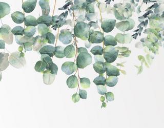 Фотообои Эвкалиптовые листья 22351