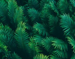 Фотообои Тропические листья 20161