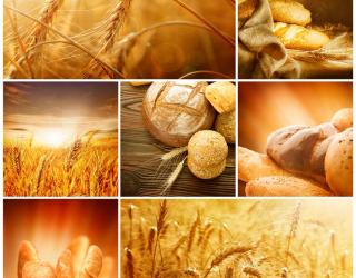 Фотообои Пшеница, хлеб 2689