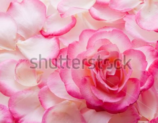Фотообои Роза 159786803