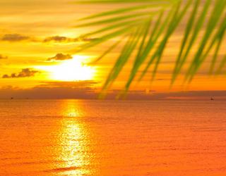 Фотообои Море, закат, пальмы 1474