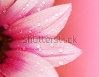 Фотообои Цветы 77212135