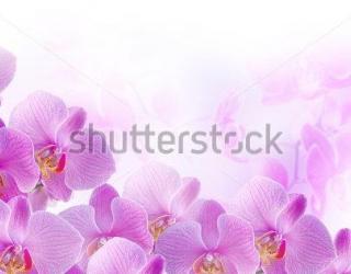 Фотообои Орхидея 231910852
