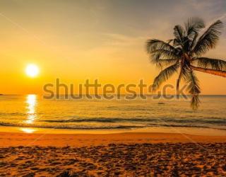 Фотообои Пляж, закат, пальмы 129785939