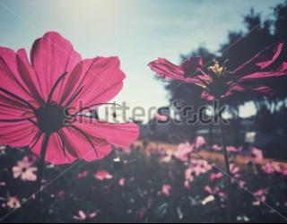 Фотообои Цветы 355814408