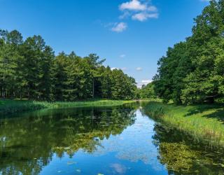 Фотообои Река в лесу 23153