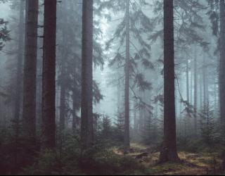 Фотообои Серый лес 24338