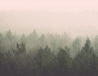 Фотообои лес и розовый туман 20841