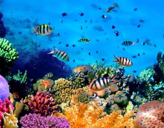 Фотообои Подводный мир. Красоты. 3296