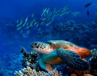 Фотообои Черепаха в глубине 6969