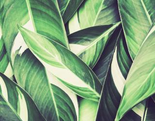 Фотообои Зелёные листья 26532